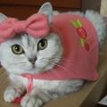 """Манаенкова Екатерина, г.Новосибирск, """"Fashion cat"""""""