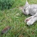 "Ростиславина Алёна, 18 лет, г.Санкт-Петербург, ""Кошки-мышки"""